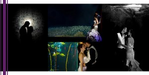 Florida Aquarium Wedding8