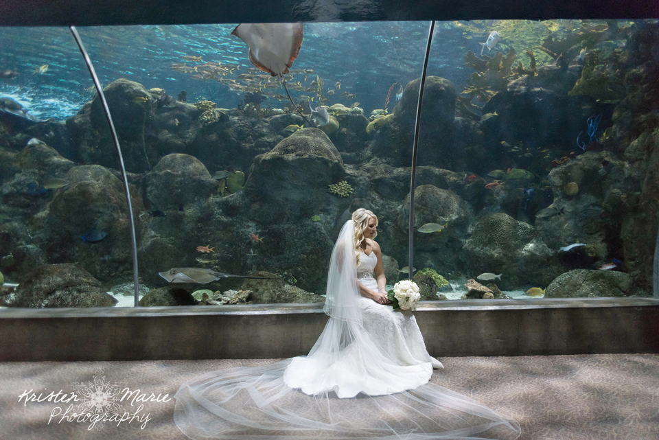 Virginia beach aquarium wedding